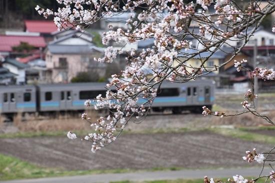 2020年4月19日撮影 159M E127系と桜を絡めて