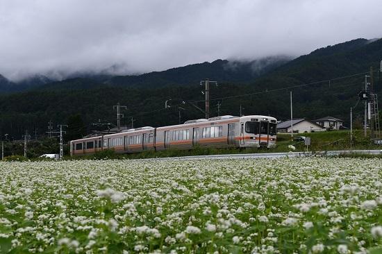 2020年9月13日撮影 飯田線は伊那新町の蕎麦の花と213M 313系1700番台
