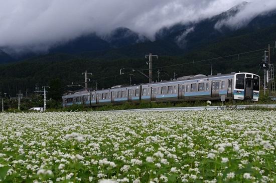 2020年9月13日撮影 飯田線は伊那新町の蕎麦の花と210M 211系