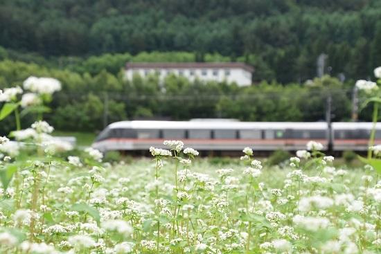 2020年6月28日撮影 1008M 383系 「WVしなの8号」と蕎麦の花