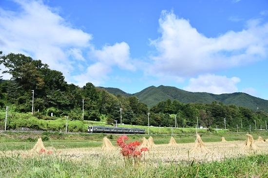 2020年9月26日撮影 飯田線は210M 211系と彼岸花をワイドで