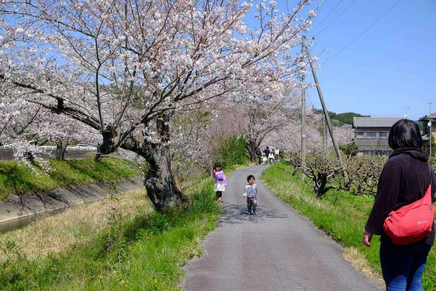 sakura200405.jpg