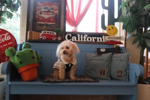 Dog Cafe EverDream