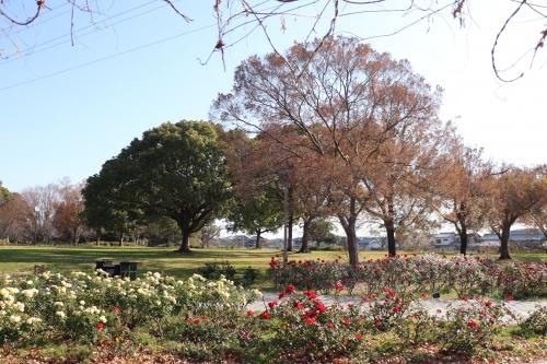 尼崎農業公園