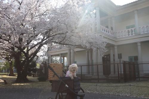 桜之宮公園