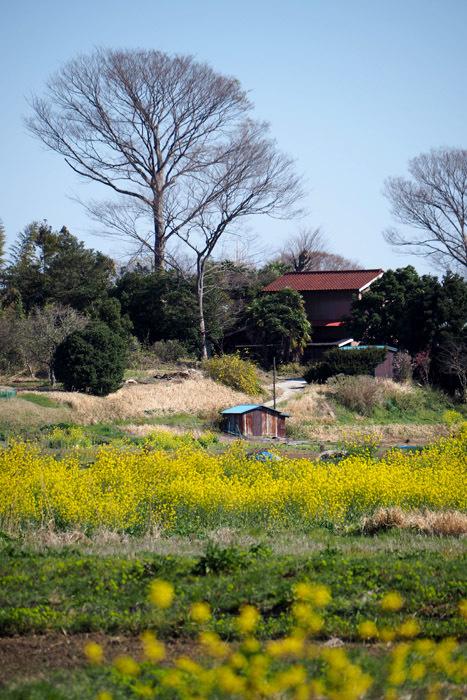 satoyamaB62 (4)