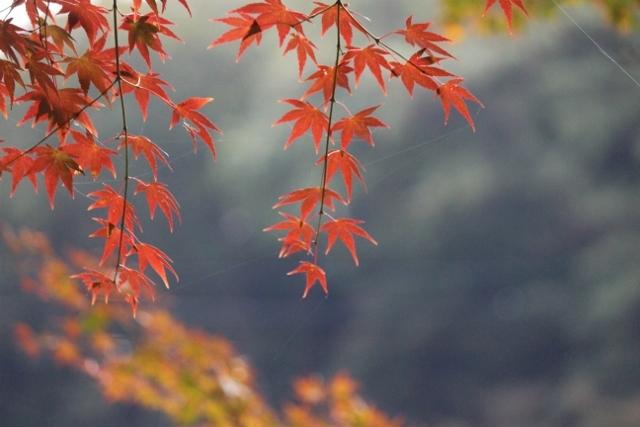 2020年11月岡崎東公園紅葉 (46) (640x427)