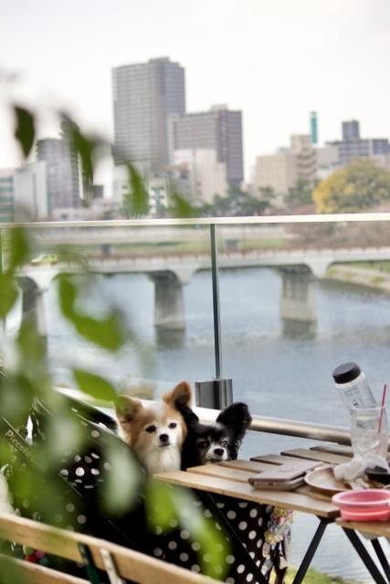 2020年11月岡崎東公園紅葉 (261) (427x640)