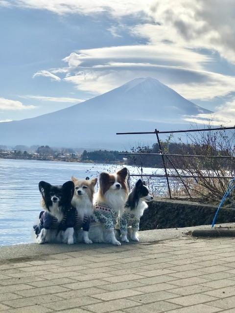 2020月12月ルイちゃんお誕生日旅行 (103) (480x640)