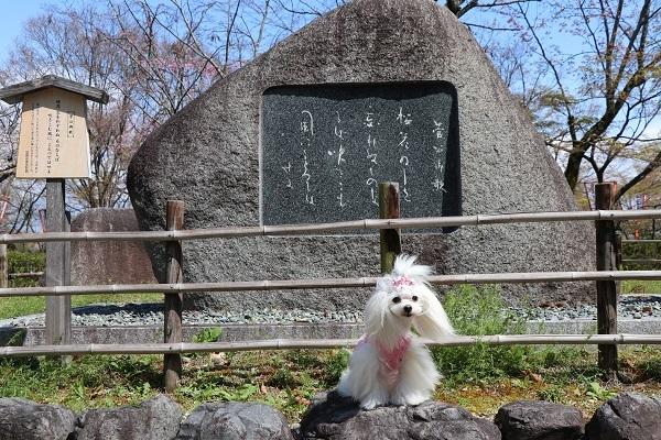 2020.04.07 お花見(長岡天満宮)①-6