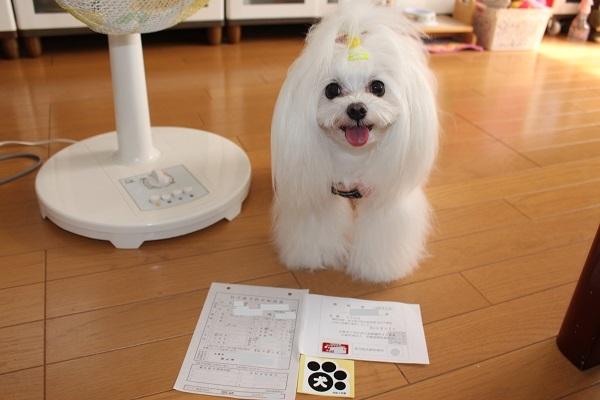 2020.08.06 狂犬病予防接種-1