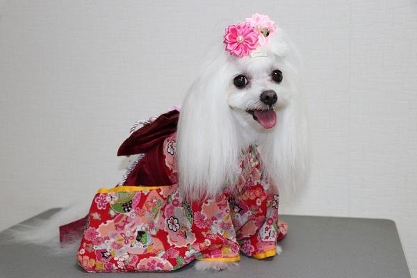 2020.10.12 犬服教室(袴)-3