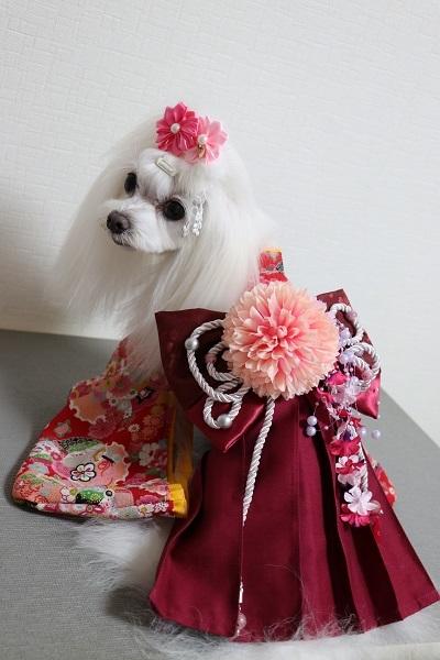 2020.10.12 犬服教室(袴)-4