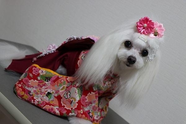 2020.10.12 犬服教室(袴)-5