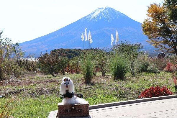 2020.12.02 富士五湖~清里+軽井沢旅行1日目⑦大石公園-8