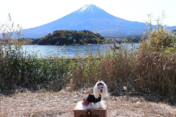 2020.12.02 富士五湖~清里+軽井沢旅行1日目⑦大石公園-12