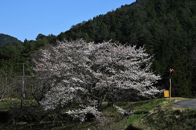 棚田の春5