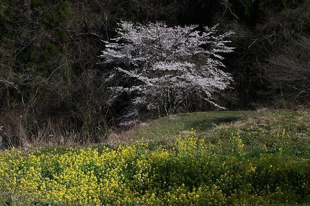 棚田の春9