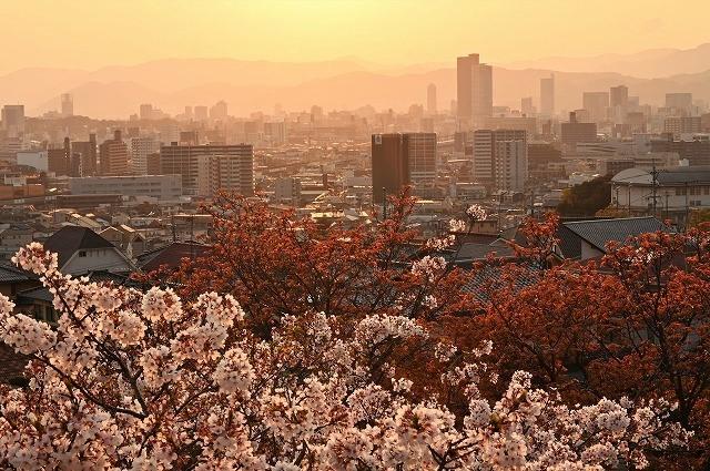 桜と夕日1