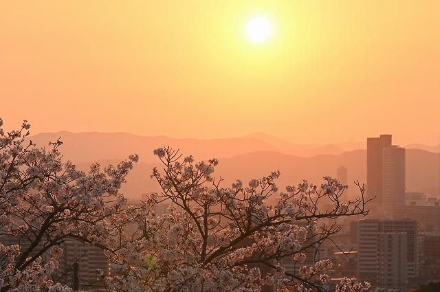 桜と夕日2