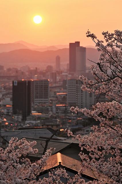 桜と夕日3