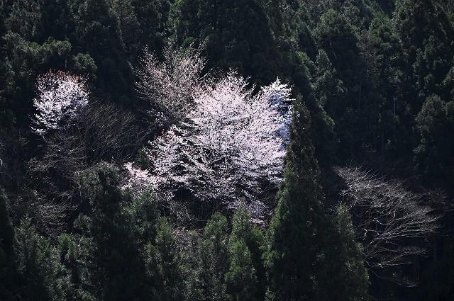 津浪の春4