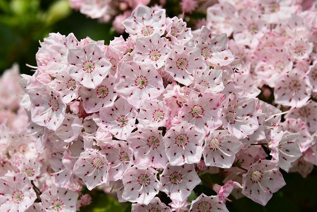 木の花10