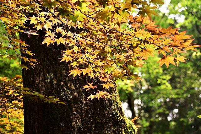 木の花13