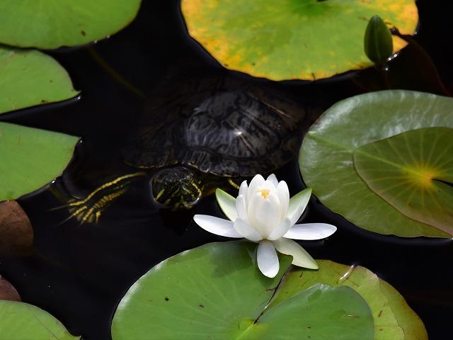 蛇の池10