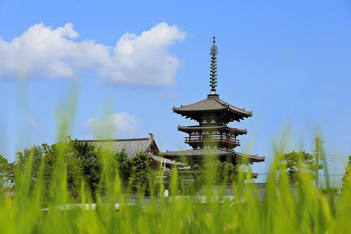 薬師寺 秋景1