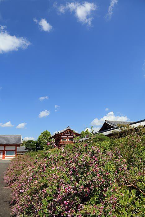 薬師寺 秋景4
