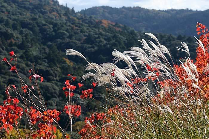 秋の若草山2