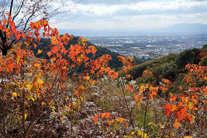 秋の若草山3