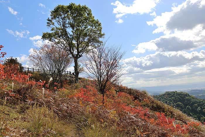 秋の若草山4