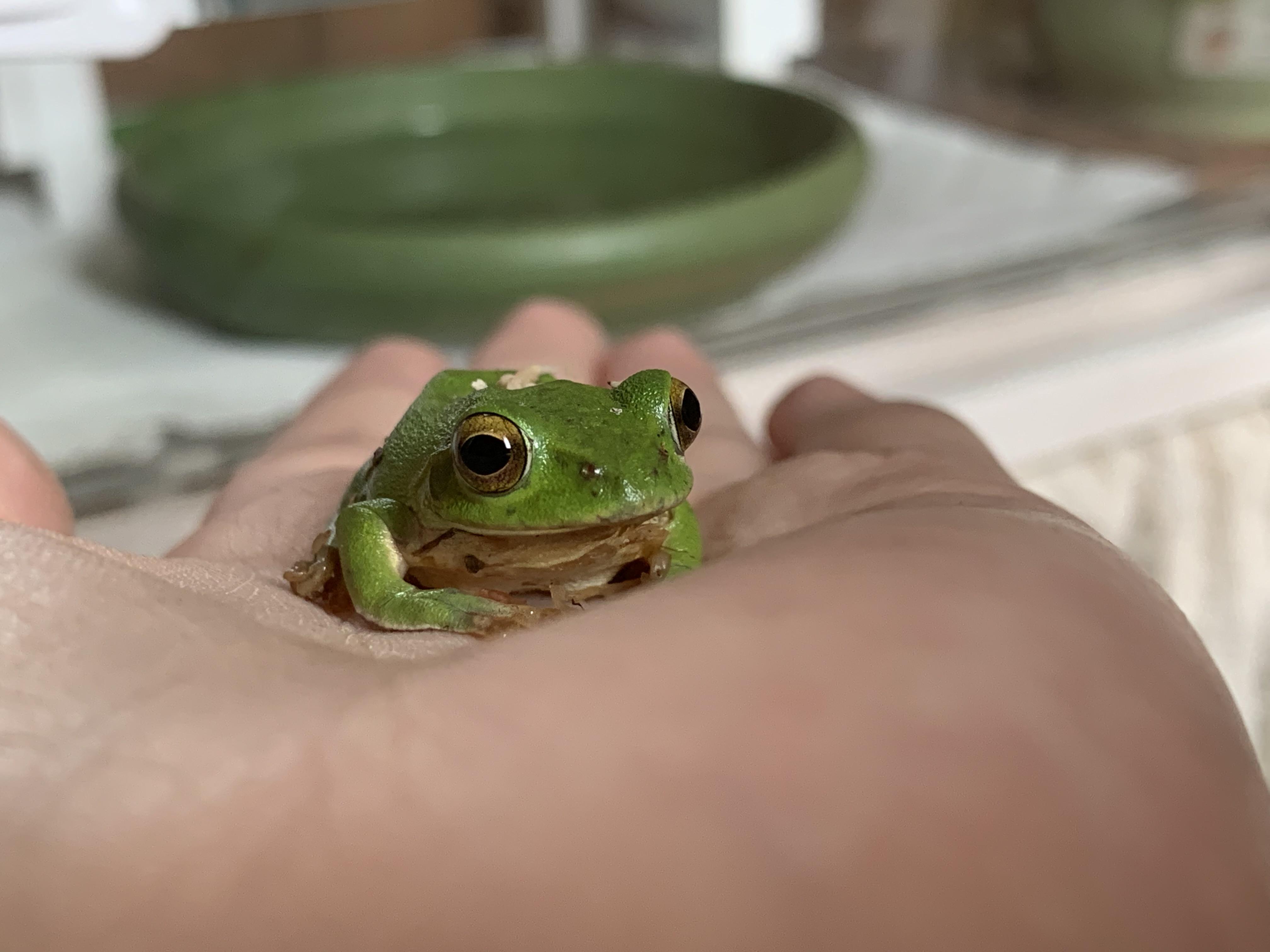 飼育 カエル