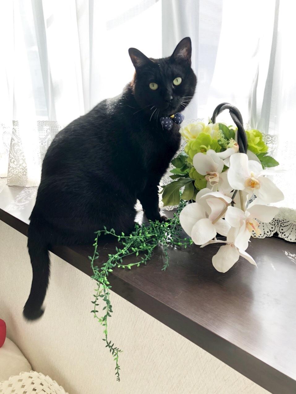 お花と一緒にポーズ!のくろすけ😊