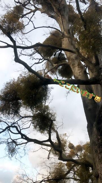 この大きな木に茶太郎は居ました