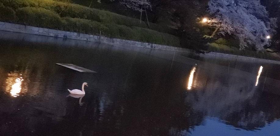 夜の松山のお堀端 1