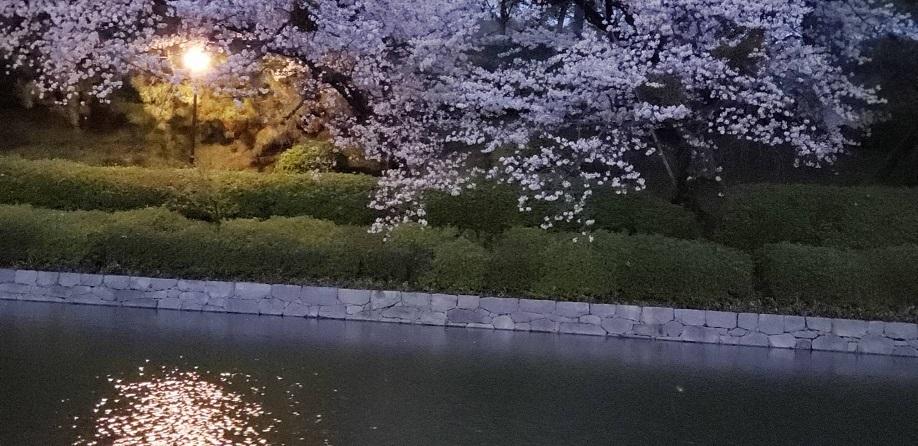 夜の松山のお堀端 4