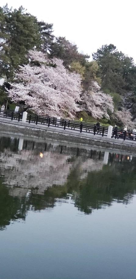 お堀の水に逆桜 1