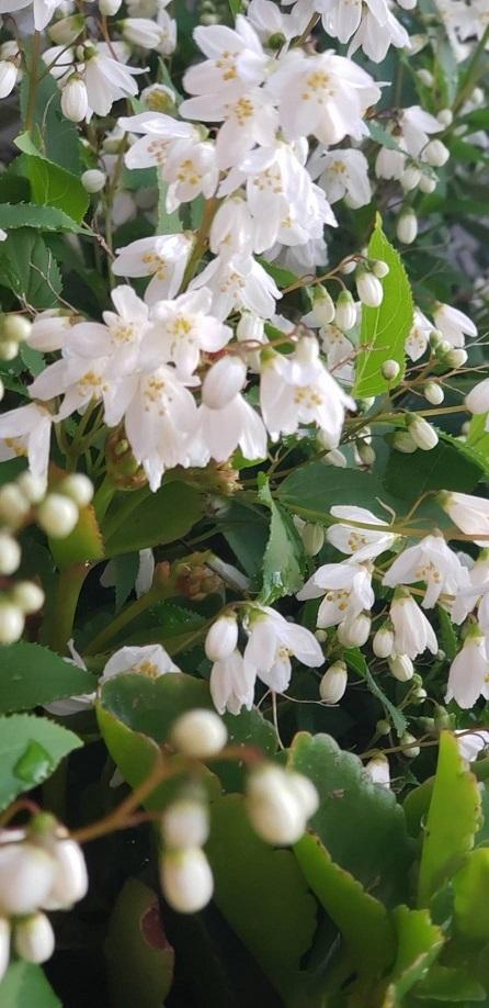 ミーママ家のお花5