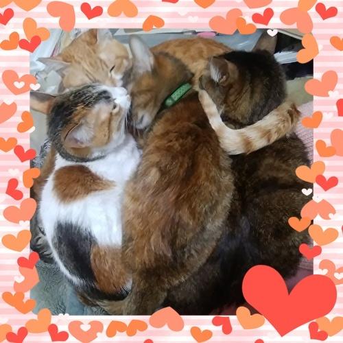 アグネス家の猫ちゃん達、仲良くお昼寝