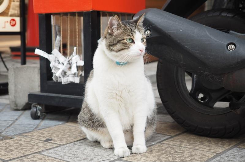 道後の猫1