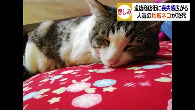 道後の猫5