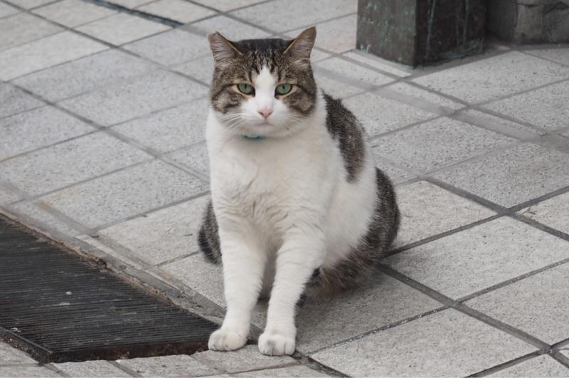 道後の猫6