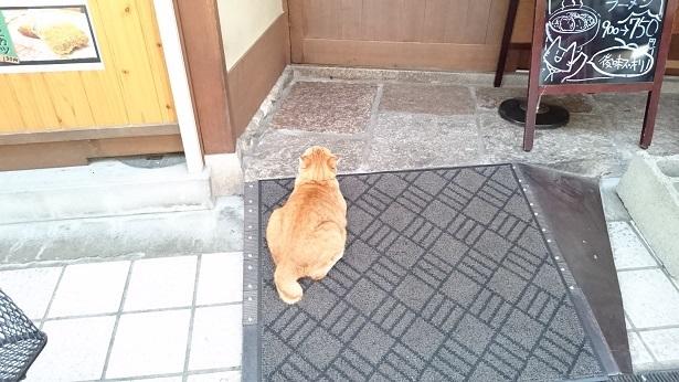 ゴン②食事処の前でご飯を待っているゴンちゃん(2017年10月撮影)