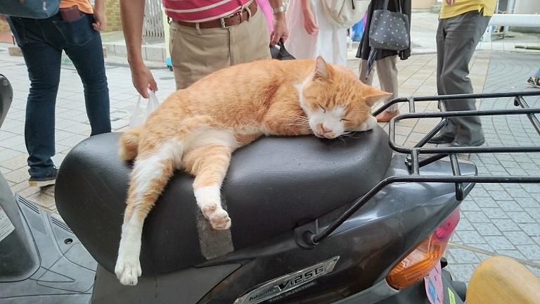 ゴン③いつもバイクのシート上で寝ていたゴンちゃん(2015年9月撮影)