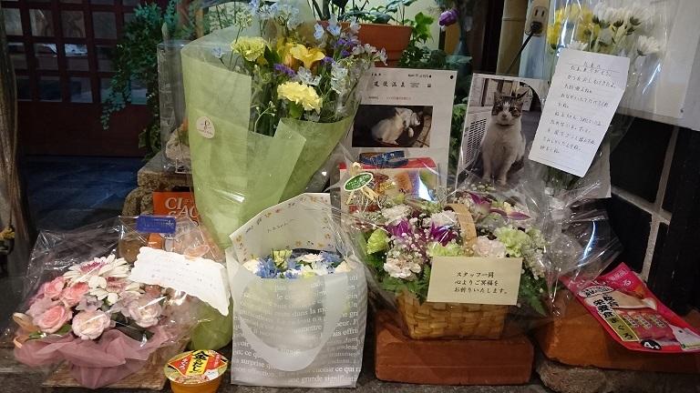 チビ2いつもチビちゃんがいた食事処の前には、チビちゃんの写真が飾られ、沢山のお花や手紙、チュールなどが供えられていました😢