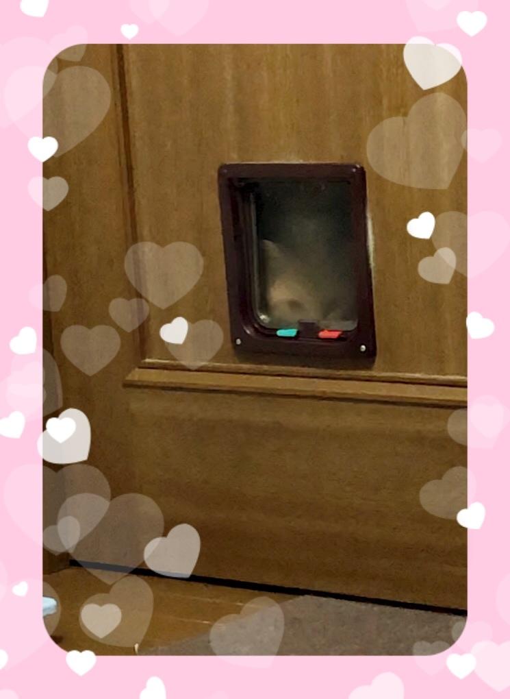 猫窓から、こっそりこちらの様子を伺う茶太郎くん😊
