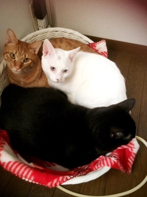 【2017/1 弟猫達みんなで集まって暖っています】